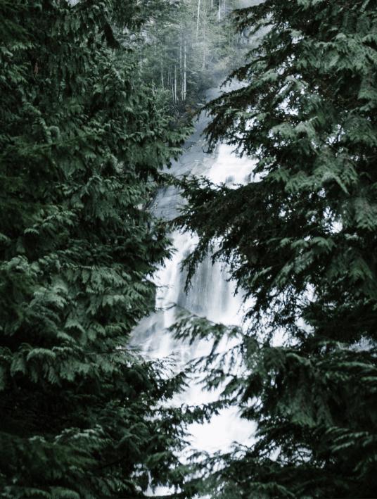 Waterfall behind trees