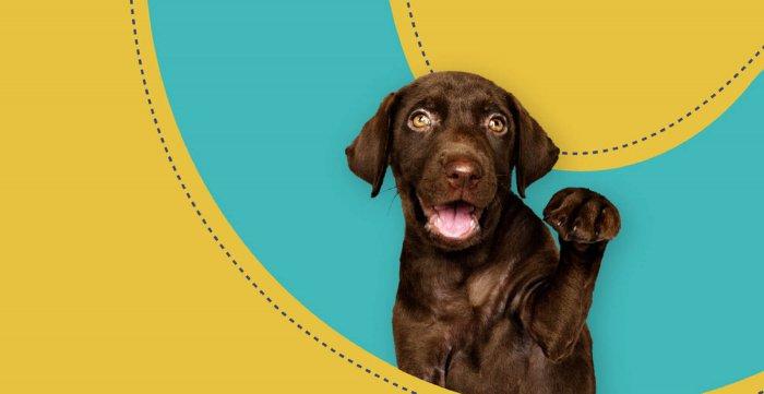 A cute dog waving hello