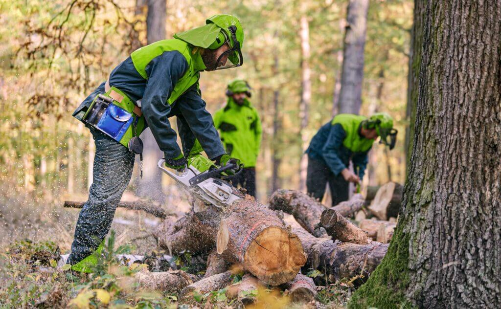 Workers cutting wood in the forest with a chainsaw